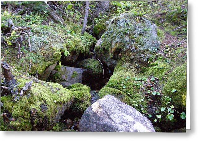 Moss Covered Creek Greeting Card