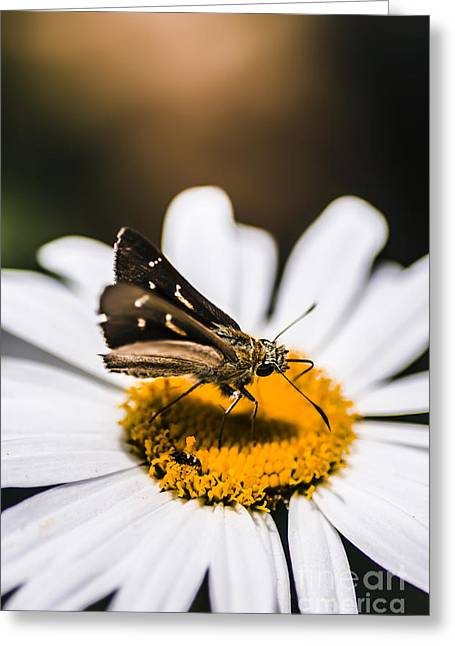 Moth Insects On A Bright And Lush Garden Flower Greeting Card