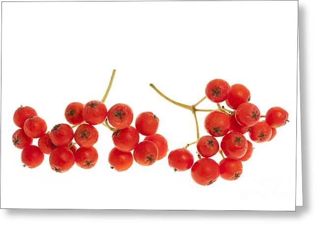 Mountain Ash Berries Greeting Card