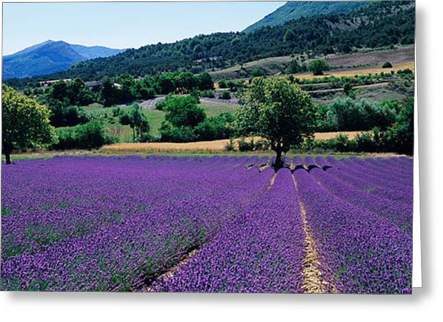 Mountain Behind A Lavender Field Greeting Card by Panoramic Images