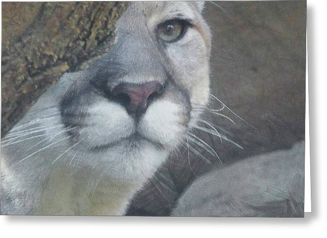 Mountain Lion Painterly Greeting Card by Ernie Echols
