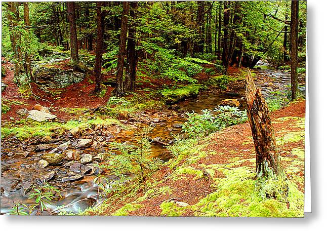 Mountain Stream With Hemlock Tree Stump Greeting Card