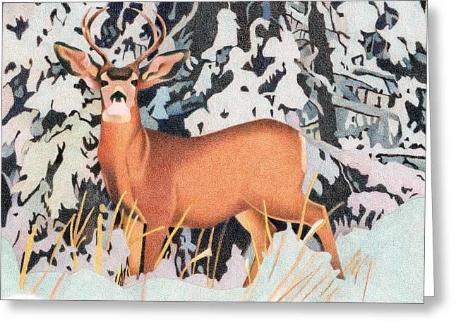 Mule Deer Greeting Card by Dan Miller