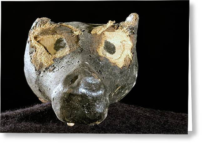 Mummified Dog's Head From Ancient Egypt Greeting Card