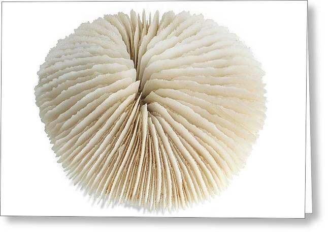 Mushroom Coral Greeting Card