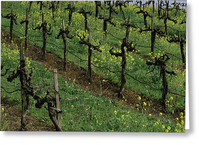 Mustard And Vine Crop In The Vineyard Greeting Card