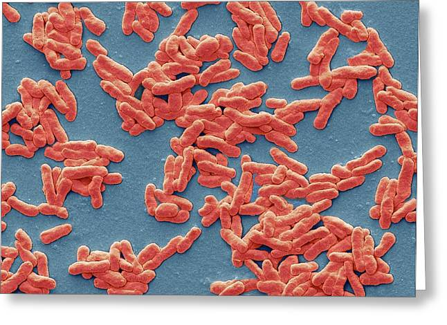Mycobacterium Leprae Greeting Card