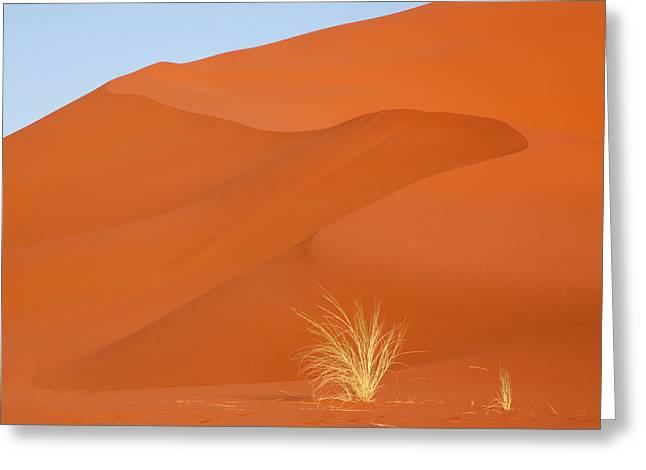 Namibia, Namib-naukluft Park Greeting Card
