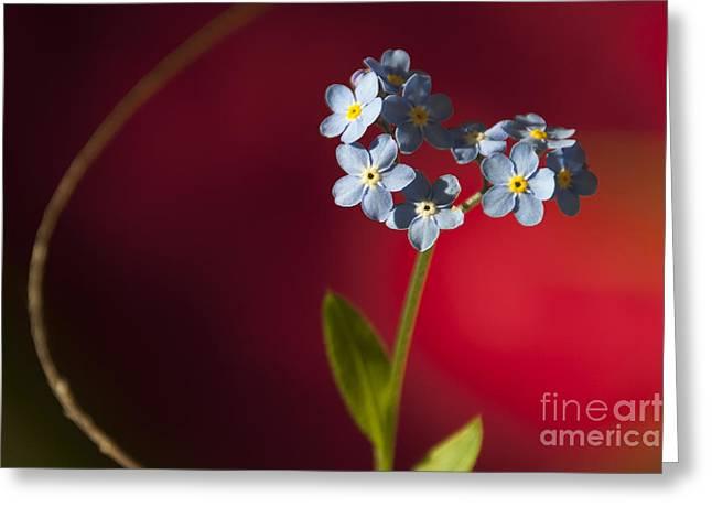 Nature Abstract Greeting Card by Svetlana Sewell