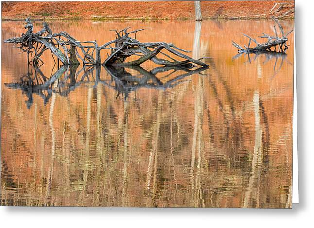 Nature Made Greeting Card by Bill Wakeley