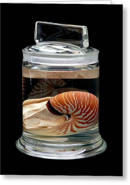Nautilus Greeting Card by Natural History Museum, London