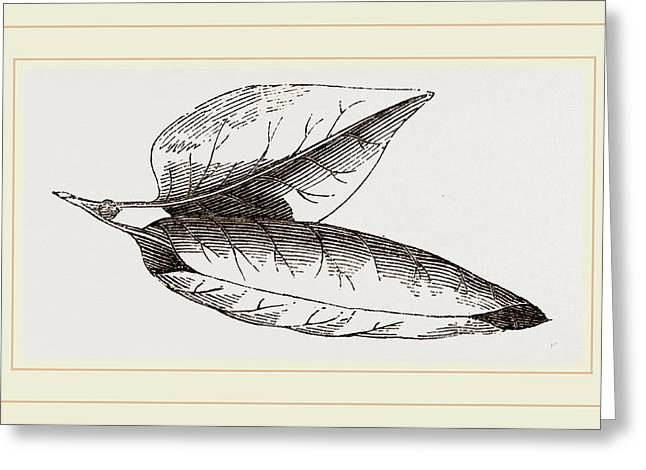 Nest Of Lilac-leaf-roller Greeting Card by Litz Collection