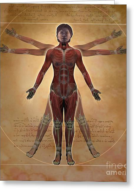 New Vitruvian Woman Greeting Card by Jim Dowdalls