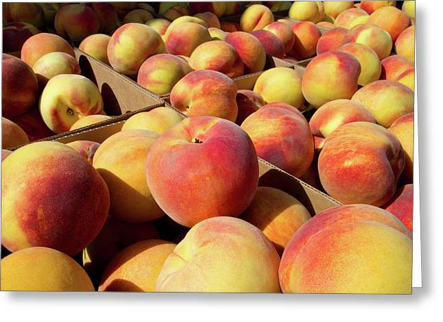 Newly Harvested Peaches On A Farm Greeting Card by David R. Frazier
