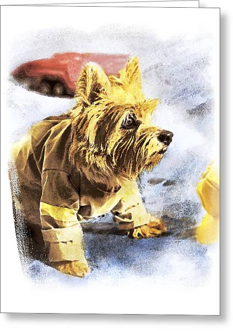 Norwich Terrier Fire Dog Greeting Card by Susan Stone