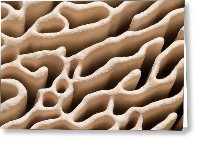Oak Mazegill Pore Structure Abstract Greeting Card by Nigel Downer