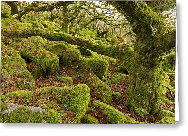 Oak Woodland On Dartmoor Greeting Card by Science Photo Library