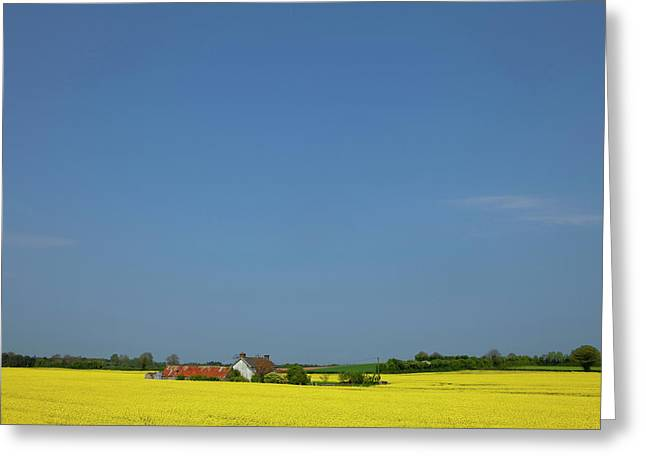 Old Farm Surrounded In Oilseed Rape Greeting Card by Panoramic Images