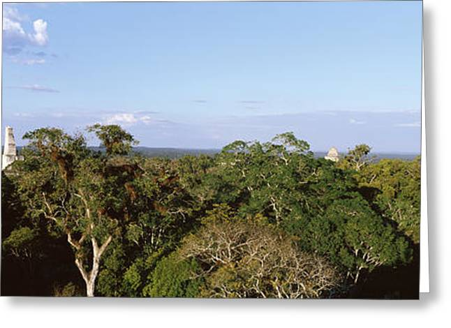 Old Temple In The Forest, Tikal Greeting Card by Panoramic Images