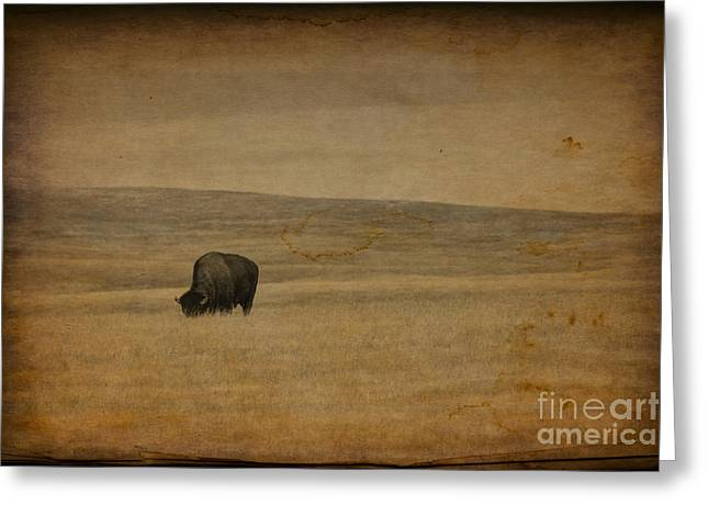 Western Themed South Dakota Bison  Greeting Card
