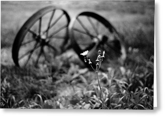 Old Wheels And Dandelion Greeting Card