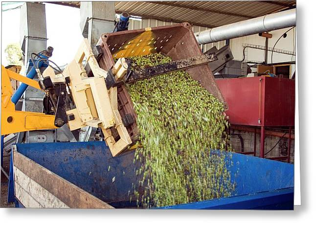 Olive Oil Press Greeting Card by Photostock-israel