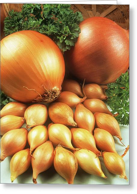 Onions Greeting Card by Ray Lacey/science Photo Library