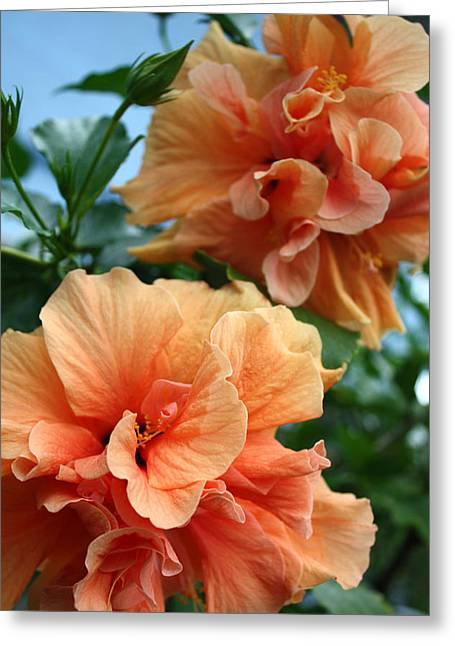 Orange Hibiscus Pair Greeting Card