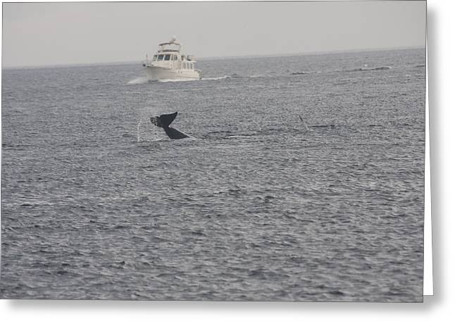 Orca - 0008 Greeting Card by S and S Photo