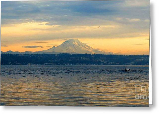 Orca Family And Mt. Rainier Greeting Card by Gayle Swigart