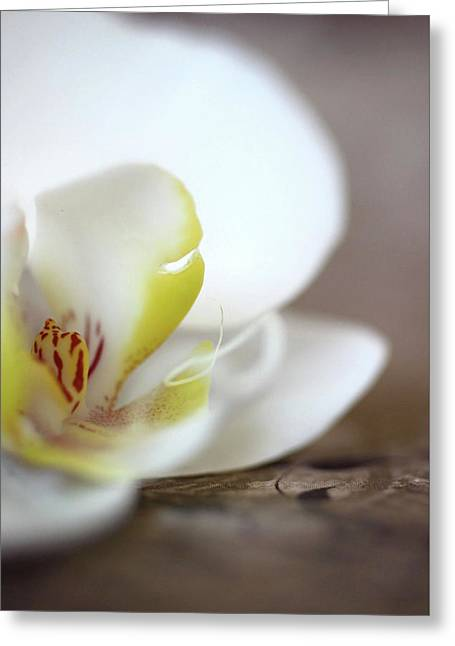 Orchid Greeting Card by AR Annahita