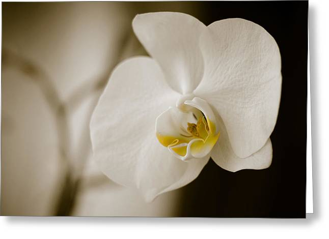 Orchid Greeting Card by Ivelin Donchev