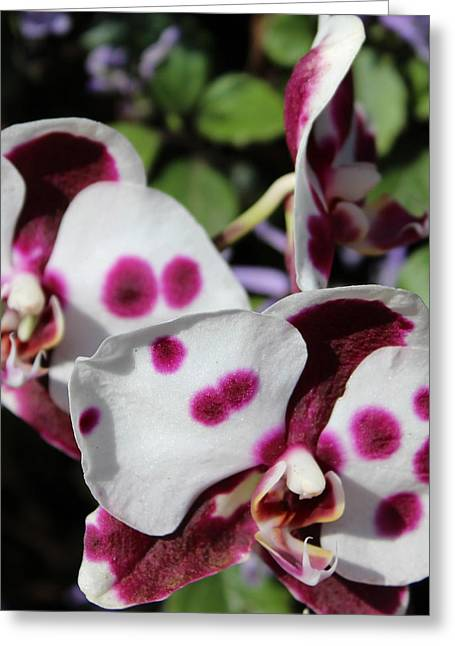 Orchid One Greeting Card by Mark Steven Burhart