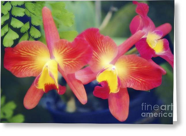 Orchids Slc. Angels Fantasy Greeting Card by Maria Mosolova
