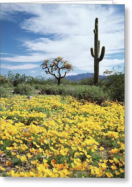 Organ Pipe Cactus National Monument Greeting Card by Christopher Talbot Frank