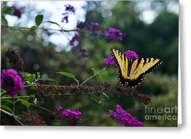 Greeting Card featuring the photograph Out Of Bounds II by Judy Wolinsky