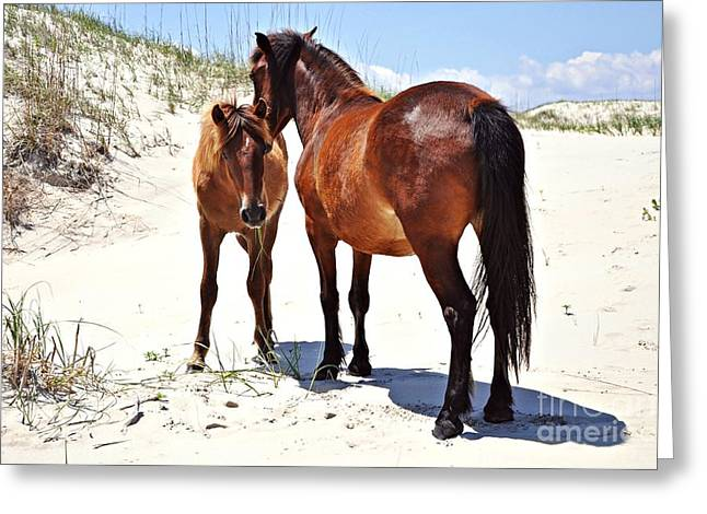 Outer Banks Wild Horses Greeting Card by Mike Baltzgar