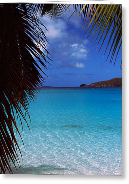 Palm Tree On The Beach, Maho Bay Greeting Card by Panoramic Images