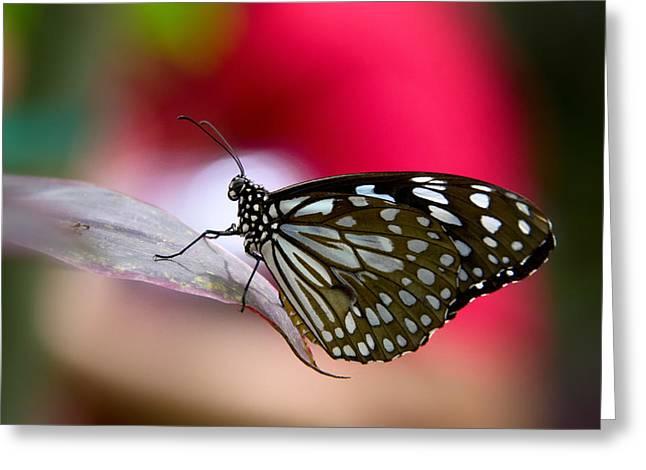Paper Kite Butterfly  Greeting Card by Saija  Lehtonen