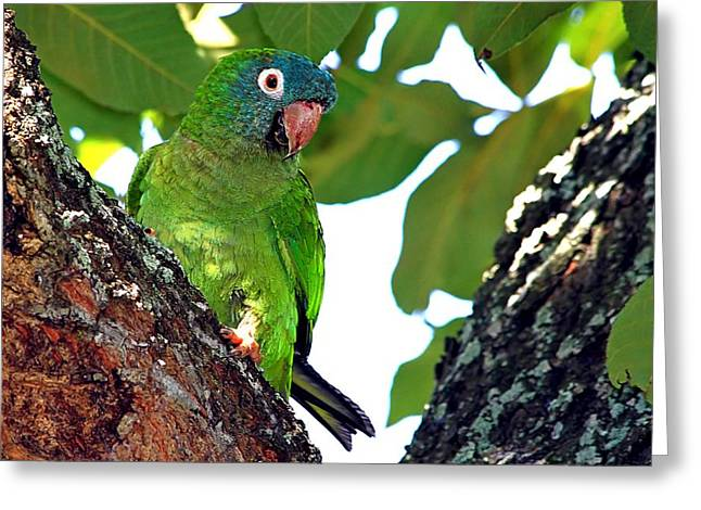 Parakeet In The Park Greeting Card