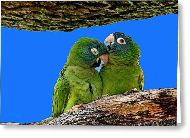 Parakeet Pair Greeting Card