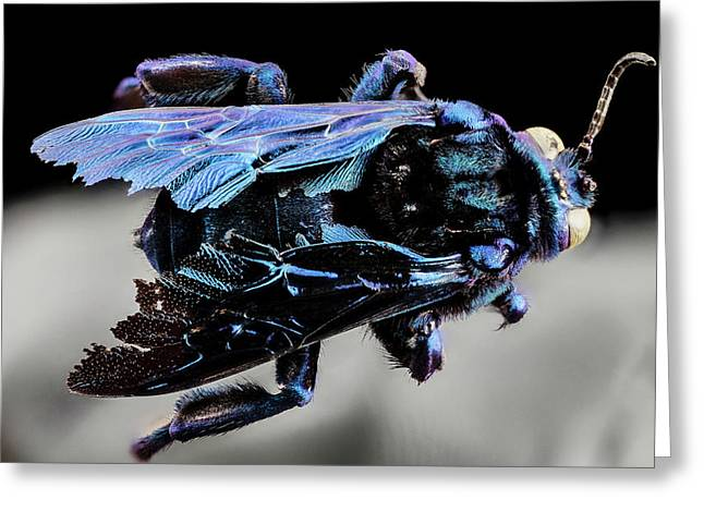 Parasitic Bee Greeting Card by Us Geological Survey