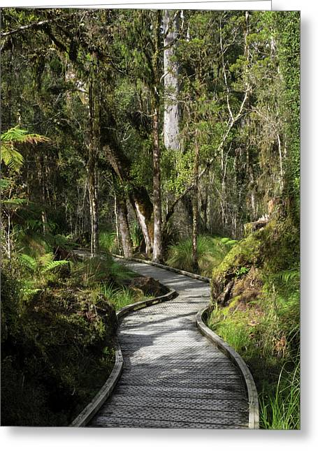 Path Passing Through Forest, Te Greeting Card