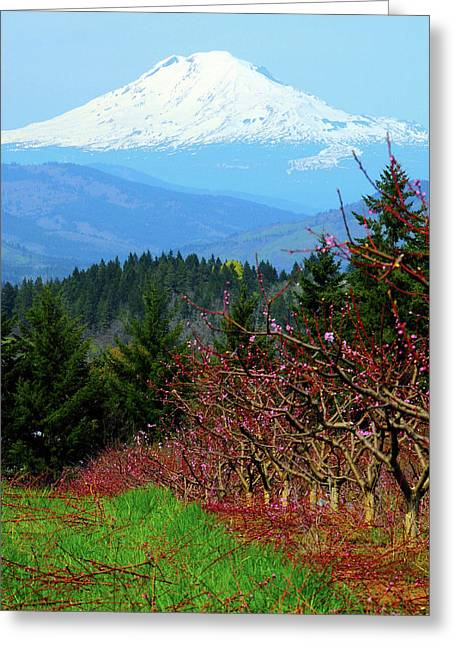 Peach Blossoms, Hood River, Oregon, Usa Greeting Card