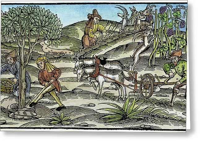 Peasants Farming, C1520 Greeting Card by Granger