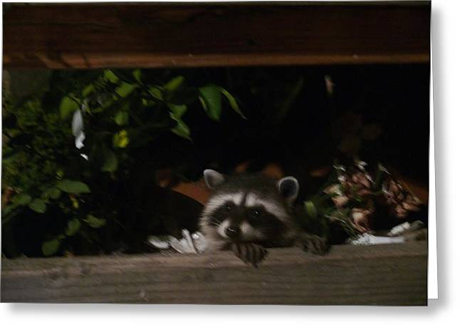Peek-a-boo Baby Greeting Card by Jacquelyn Roberts