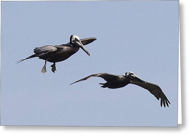 Pelicans In Flight 2 Greeting Card by Cathy Lindsey