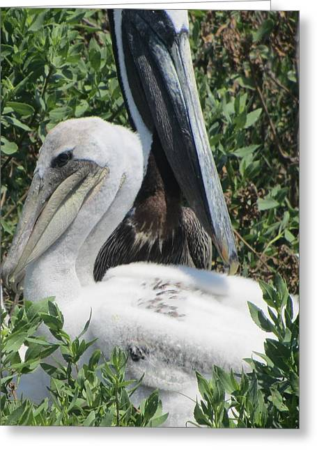 Greeting Card featuring the photograph Pelicans Of Beacon Island 2 by Cathy Lindsey