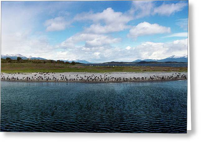 Penguins On The Beagle Channel Greeting Card by Panoramic Images