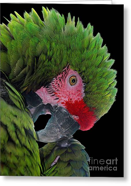 Pensive Parrot Greeting Card